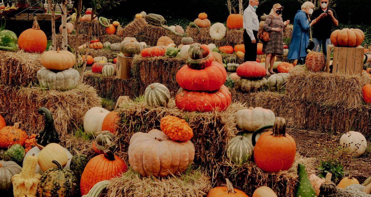 halloween et les citrouilles qui font peur